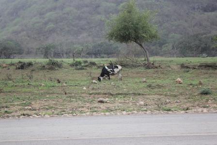 Salalah Route Two : Wadi Dirbat