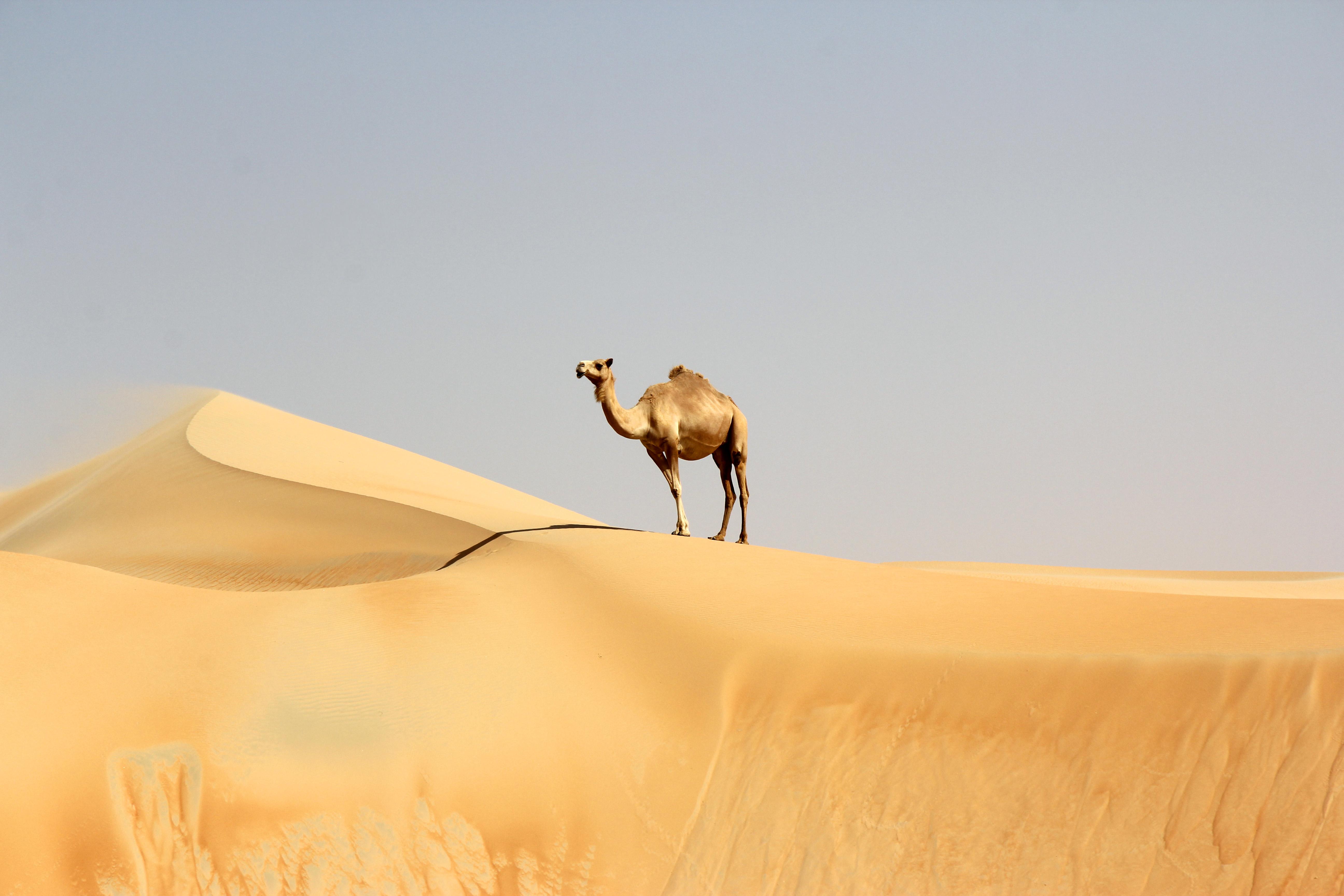 Winner Desert Life category - Team Sandsurfers
